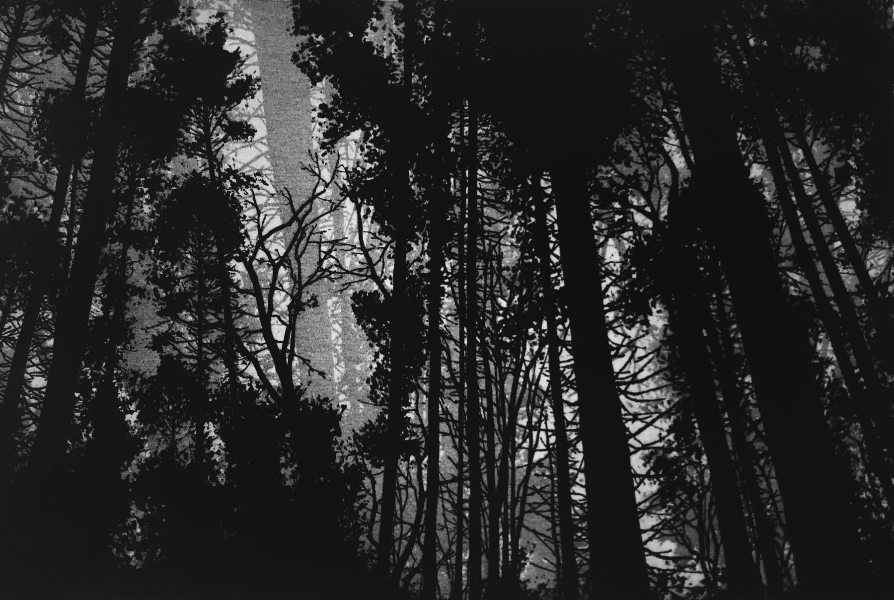 Blaze Cyan, Pits Wood, Tisbury, 2017