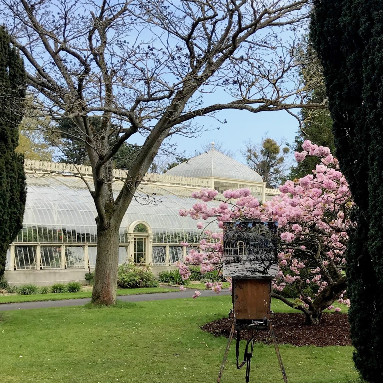 11 APRIL 2019 NATIONAL BOTANIC GARDENS OF IRELAND, DUBLIN Shades of Pink, sketch photo: Gerard Byrne
