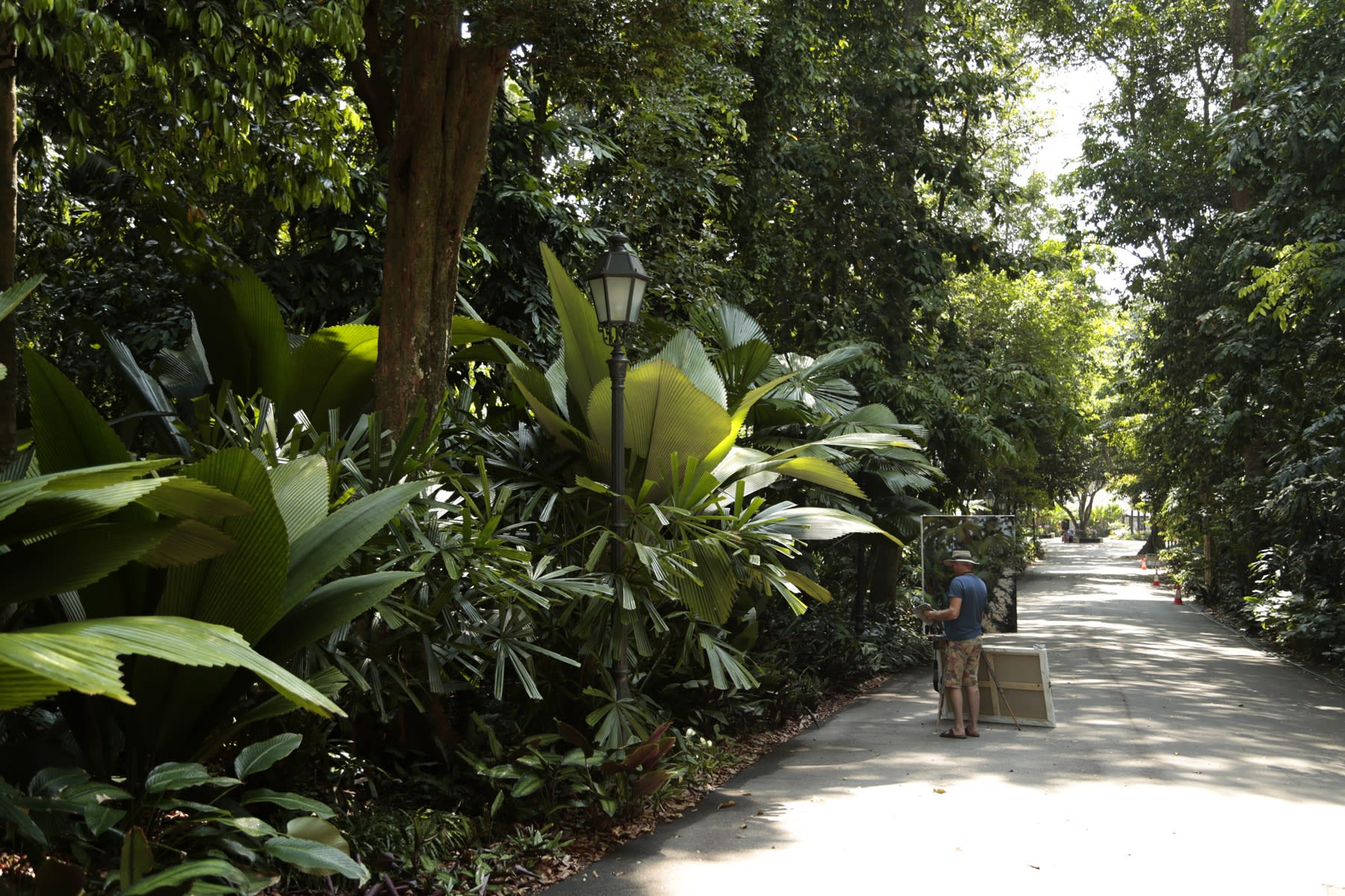 21 AUGUST 2019 Maranta AVENUE, SINGAPORE BOTANIC GARDENS Jungle Vibes photo: Agata Byrne