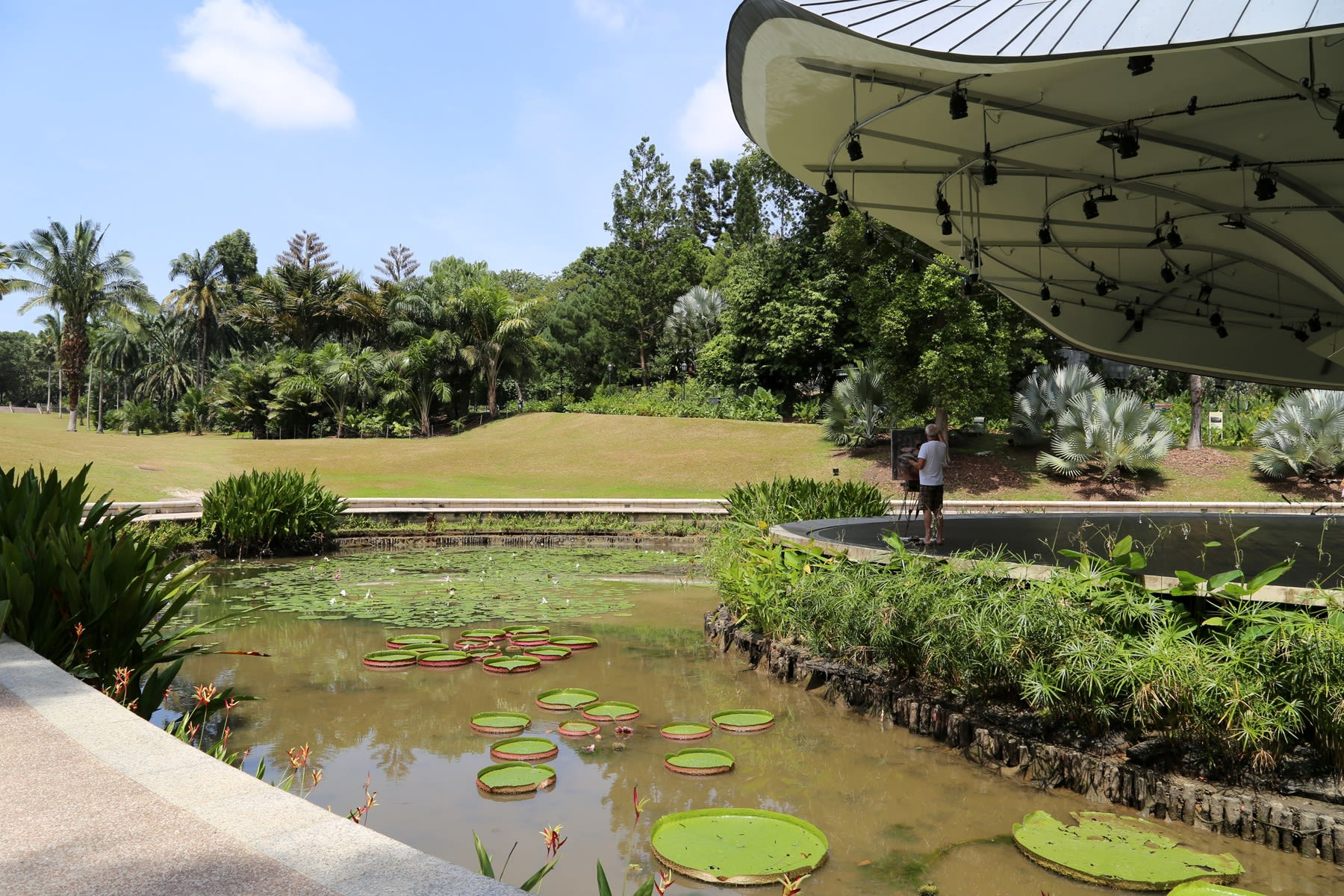 29 AUGUST 2019 SHAW FOUNDATION SYMPHONY STAGE, SINGAPORE BOTANIC GARDENS Victoria Water Lilies photo: Agata Byrne