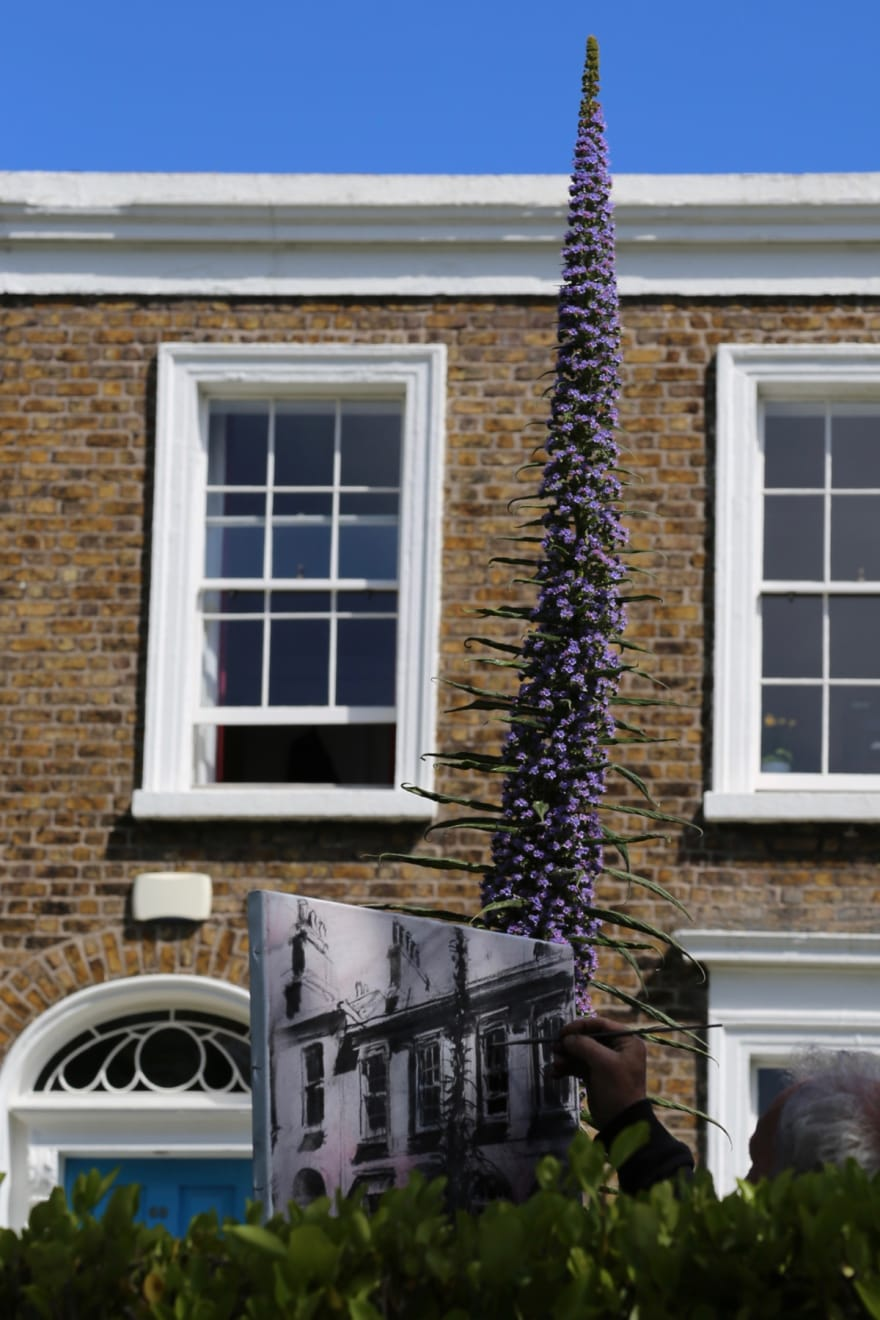 27 APRIL 2020 RANELAGH RD, RANELAGH, DUBLIN Tim's Echium in the Time of Covid photo: Agata Byrne