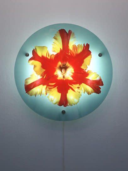 <div class=&#34;artist&#34;><strong>Helen CHADWICK</strong></div> 1953 - 1996 <div class=&#34;title&#34;><em>Billy Budd</em>, 1994</div> <div class=&#34;medium&#34;>Cibachrome transparency, glass, aluminium, electrical apparatus</div> <div class=&#34;dimensions&#34;>Diameter: 86.5 cm; Depth: 15 cm</div> <div class=&#34;edition_details&#34;>Edition of 3</div>