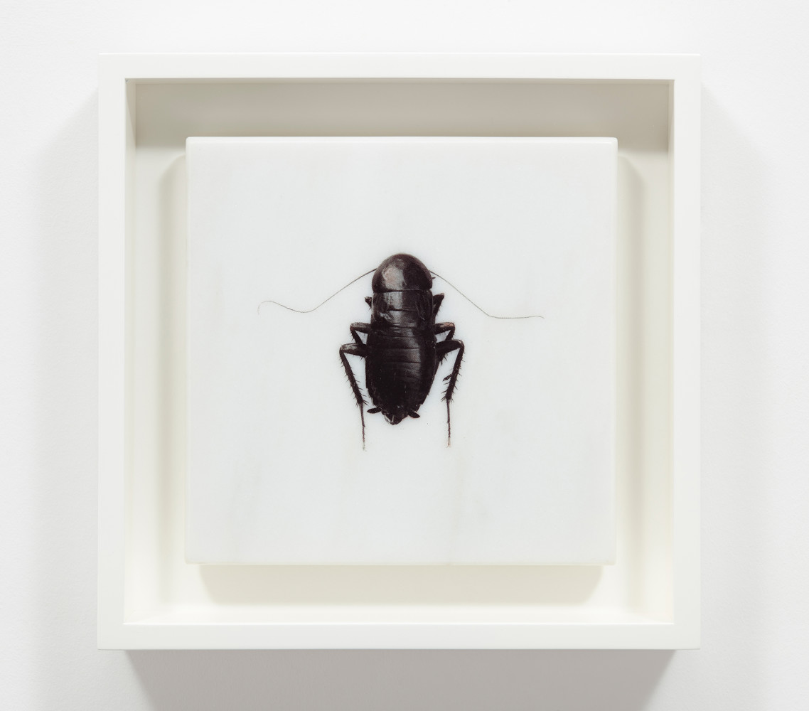 <div class=&#34;artist&#34;><strong>Helen CHADWICK</strong></div> 1953 - 1996 <div class=&#34;title&#34;><em>Et in Arcadia</em>, 1995</div> <div class=&#34;signed_and_dated&#34;>Signed and numbered 1/15 on reverse</div> <div class=&#34;medium&#34;>Photo etching printed on marble, presented in a clam shell box</div> <div class=&#34;dimensions&#34;>20 x 20 x 2 cm</div> <div class=&#34;edition_details&#34;>Edition of 15</div>