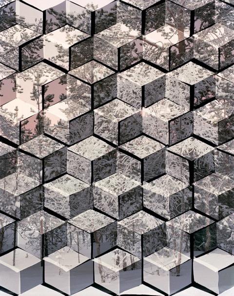 Hannah Whitaker, Arctic Landscape (Trees), 2014
