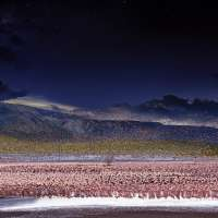 Lesser Flamingos, Lake Bogoria Kenya, Africa, Day to Night