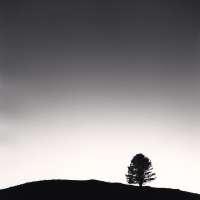 Black Pine at Night, Passo delle Capannelle, Pizzoli, Abruzzo, Italy