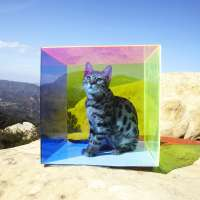 Untitled (Cat in Box)