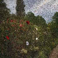 Tent-Camera Image on Ground: View of Monet's Gardens with Flowers on the Ground, Giverny, France