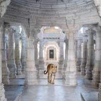 Leaving Mithyatva Behind , Adinath Temple, Ranakpur