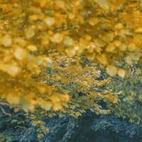 Untitled, The Garden