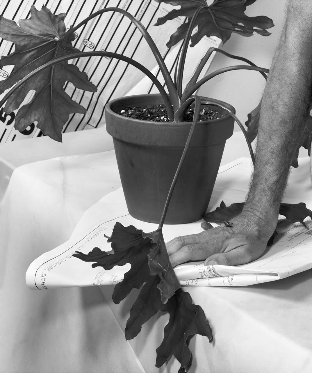 """<div class=""""artwork_caption""""><p>Plant, Hand, Paper, Fly, Table, Lines, Numbers, 2009</p></div>"""