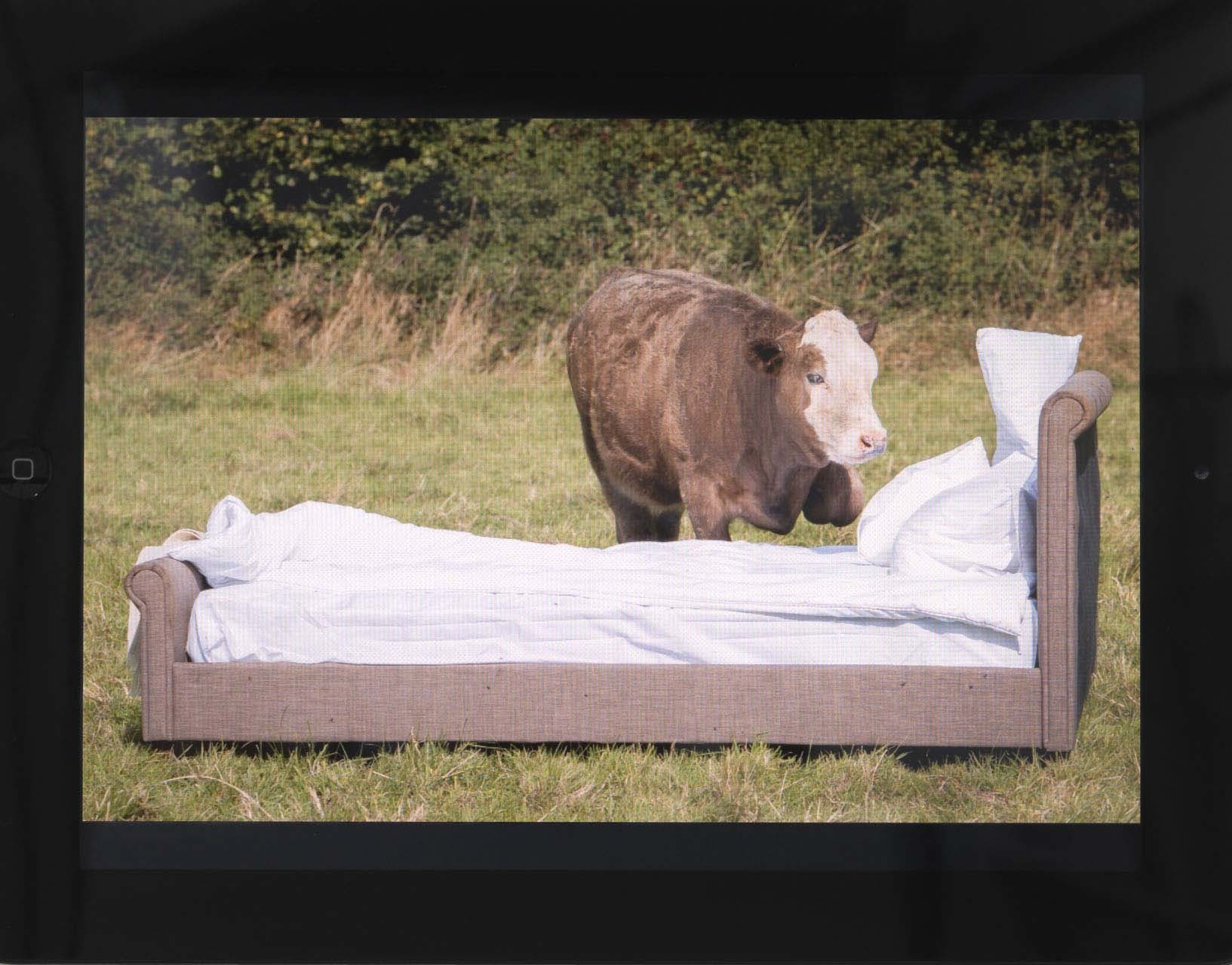 <p>Cow and\with bed</p>