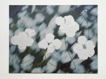 Flowers 3 - green peduncles, 2009