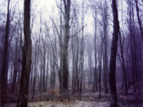 Forest Time (Forest), 1997-2001