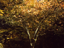 Forest Time (Autumn Tree), 1997-2001