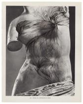 MUSÉE IMAGINAIRE, Plate 165, 2013