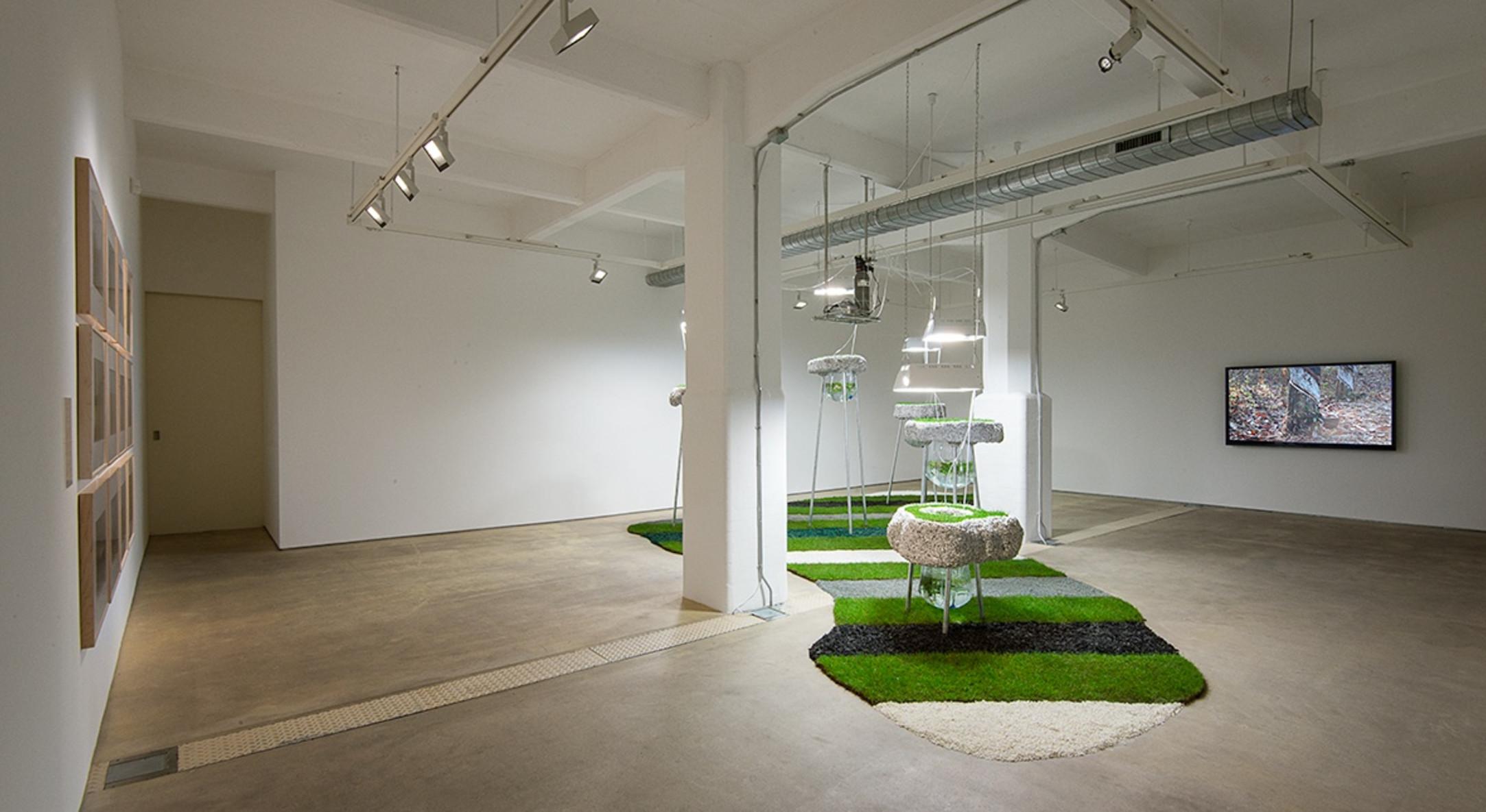 Installation view of Rachael Champion, Agnes Denes, and Rachel Pimm at Hales London