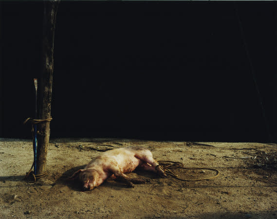 Trevor Appleson, Death at sunset (pig), 2007, C-Type print, 126 x 158 cms, 49.64 x 62.25 inches