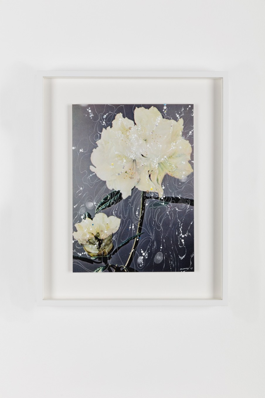 Sebastiaan Bremer, Rhododendron Hybrid Mrs Lindsay Smith Love, 2018, Archival inkjet pigment print on resin coated paper with hand additions in acrylic, photo retouch dye, and pigment pen, 27.9 x 20.3 cm 11 x 8 in, Framed: 38.1 x 31.2 x 3.7 cm, 15 x 12 1/