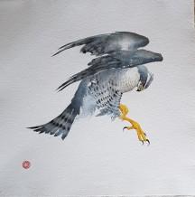 "Karl Martens  Born 1956GOSHAWK (UNFRAMED)  Watercolour  40"" x 40"""