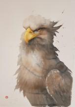 "Karl Martens Born 1956HEAD STUDY - WHITE TAILED SEA EAGLE Watercolour 39"" x 57"""