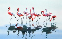"Jake Winkle Born 1964FLAMINGO AND REFLECTIONS Signed: J Winkle Watercolour 19"" x 28"""