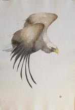 "Karl Martens Born 1956WHITE TAILED SEA EAGLE Watercolour 40"" x 27"""
