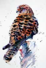 "Jake Winkle Born 1964KESTREL PERCHED Signed: J Winkle Watercolour 28"" x 19"""