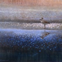 "Ewoud De groot Born 1969KENTISH PLOVER Oil on linen 31.5"" x 31.5"""