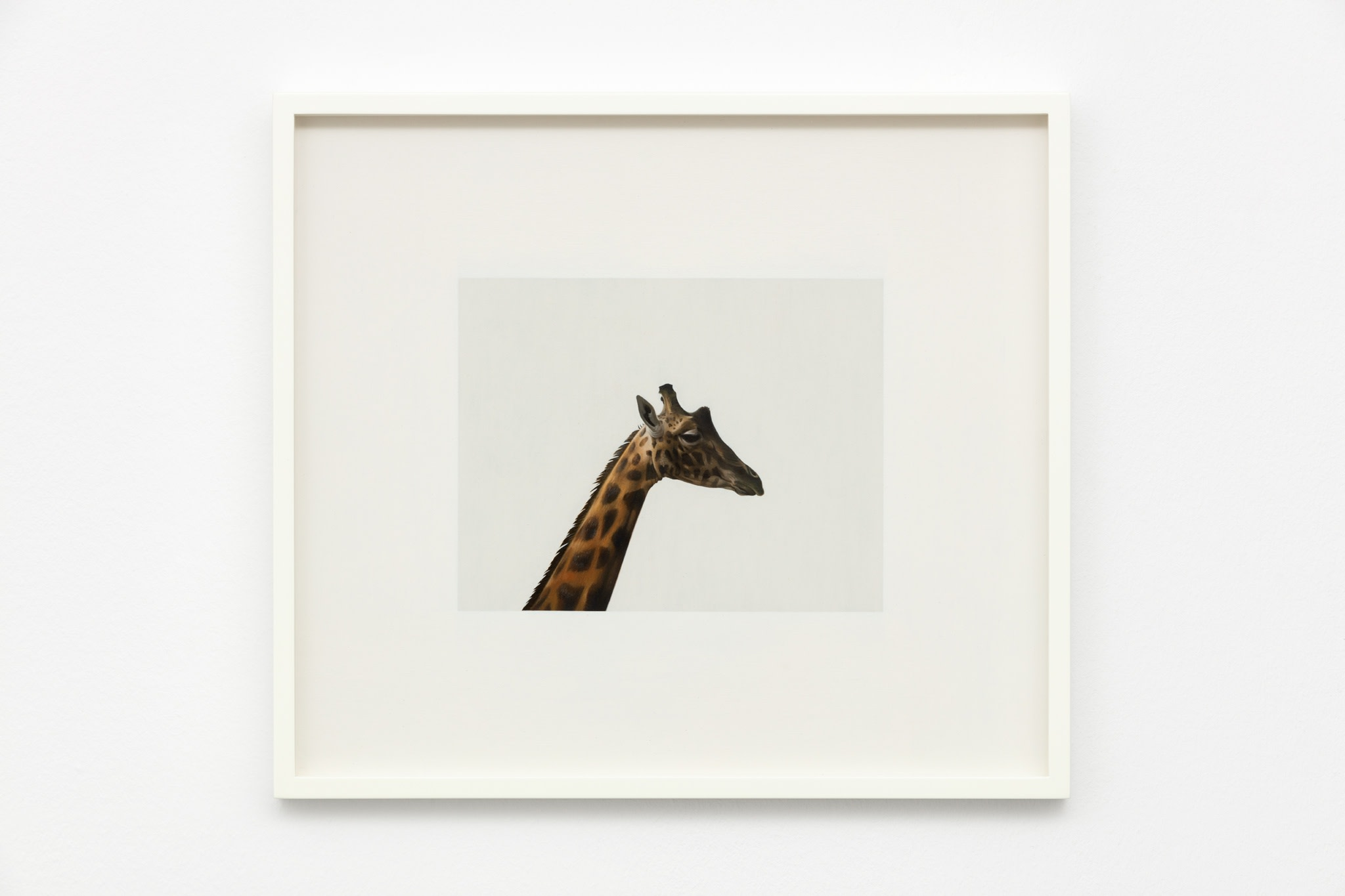 Andrew Grassie, Giraffe, 2020, tempera on paper on board, 14,8 x 18,8 cm (5 1/2 x 7 1/8 in) (image), 31,1 x 35,2 x 3 cm (12 1/4 x 13 3/4 x 1 1/8 in) (framed). Photo © Andrea Rossetti