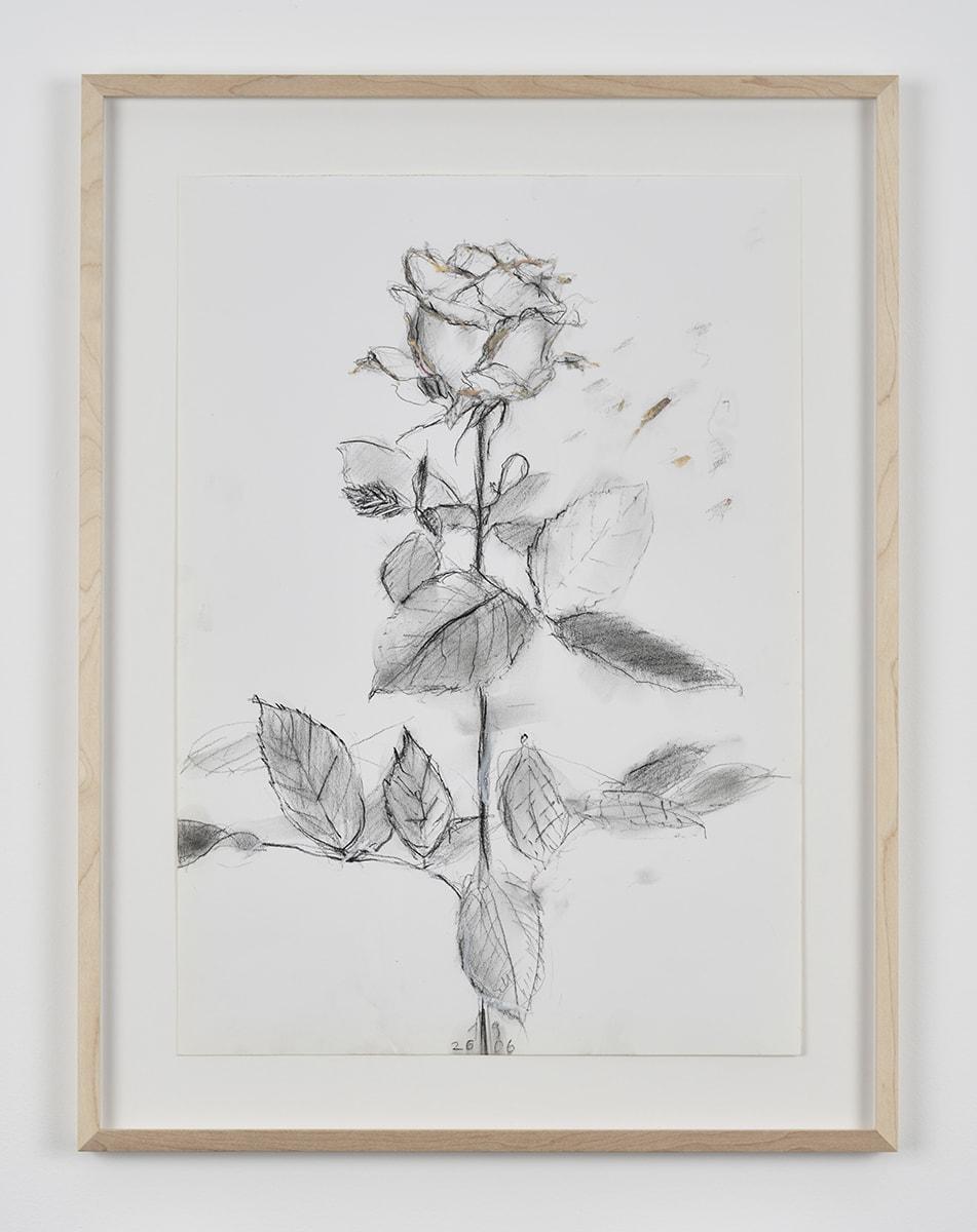 Sabine Moritz, Rose 49, 2019