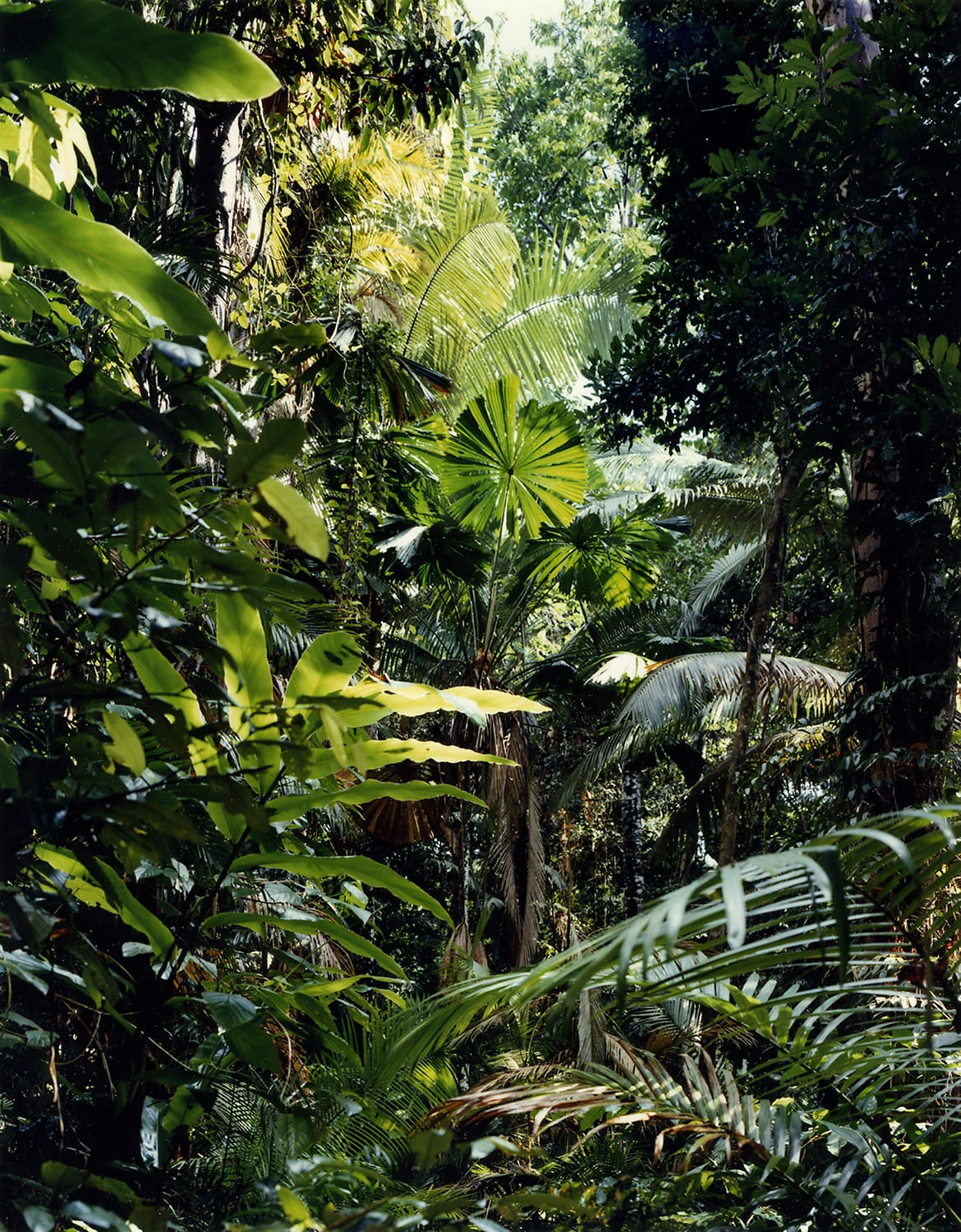 Thomas Struth New Pictures from Paradise