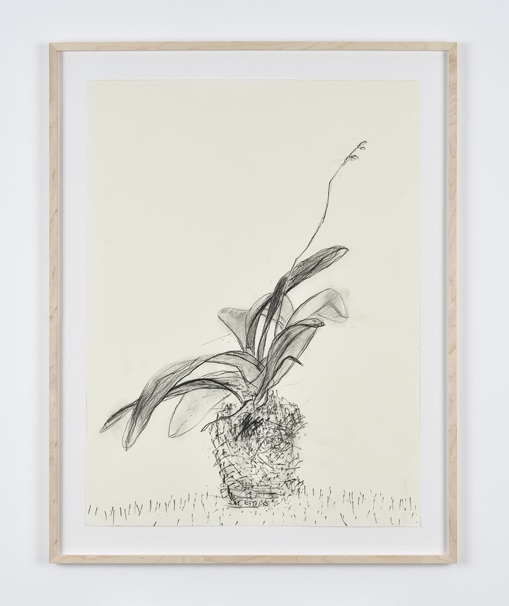 Sabine Moritz, Budding Orchid I, 2019