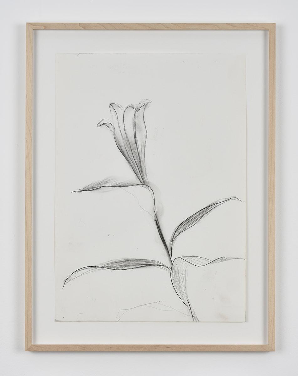 Sabine Moritz, Lily 59, 2019