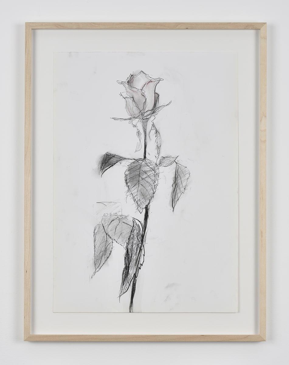 Sabine Moritz, Rose 47, 2019