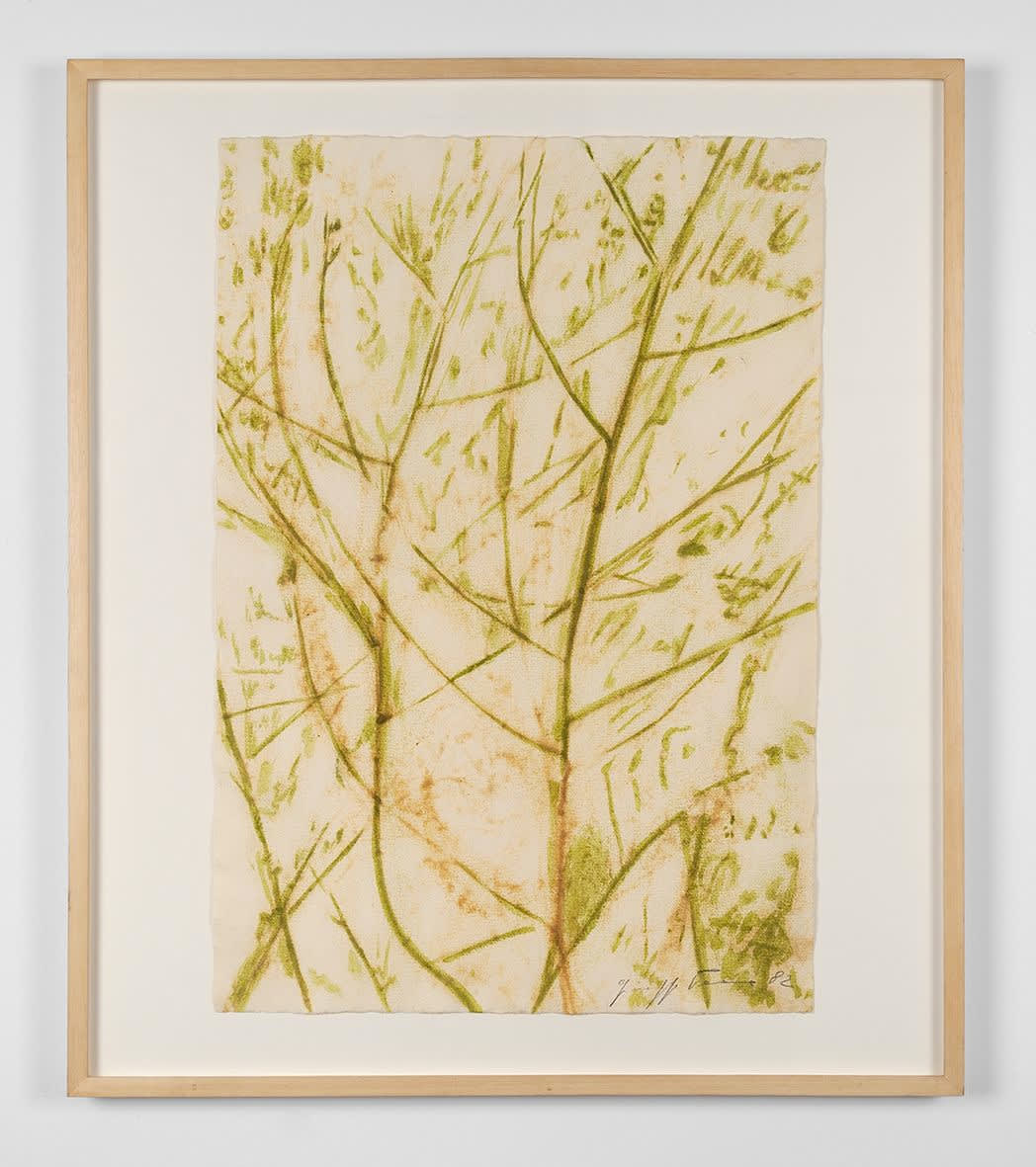 Giuseppe Penone, Green as a Tree, 1982
