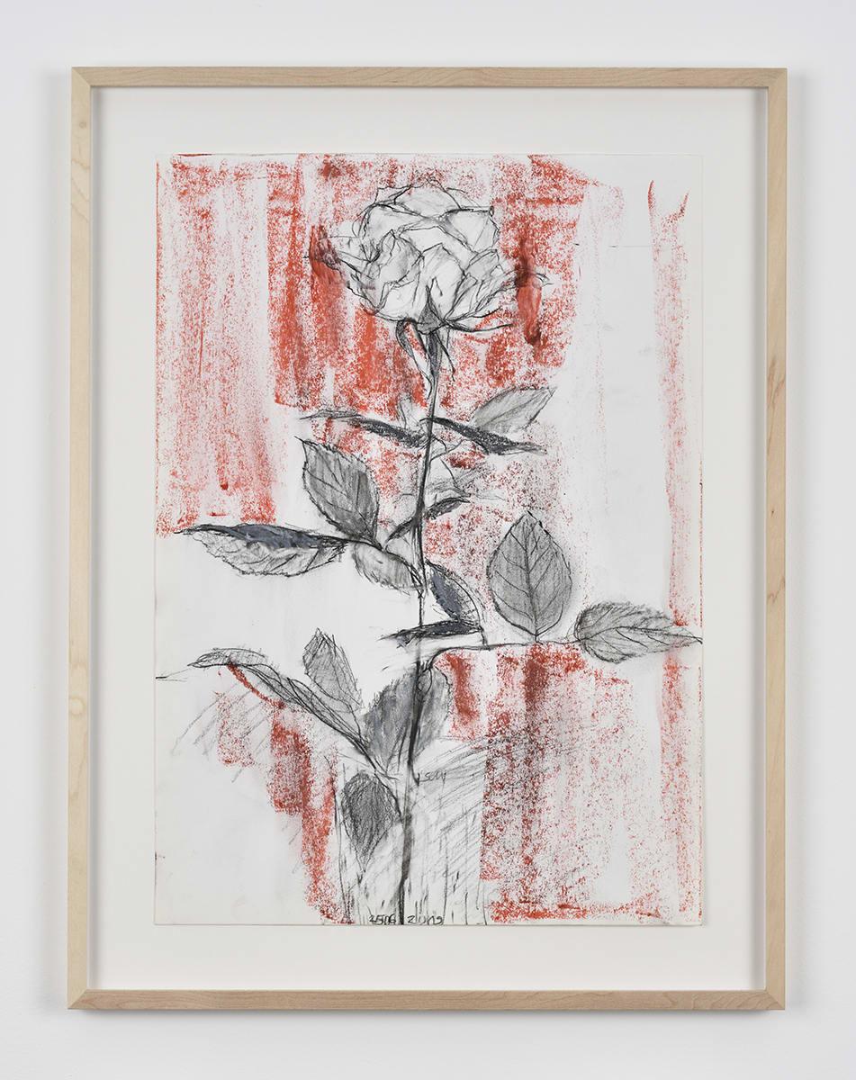 Sabine Moritz, Rose 50, 2019