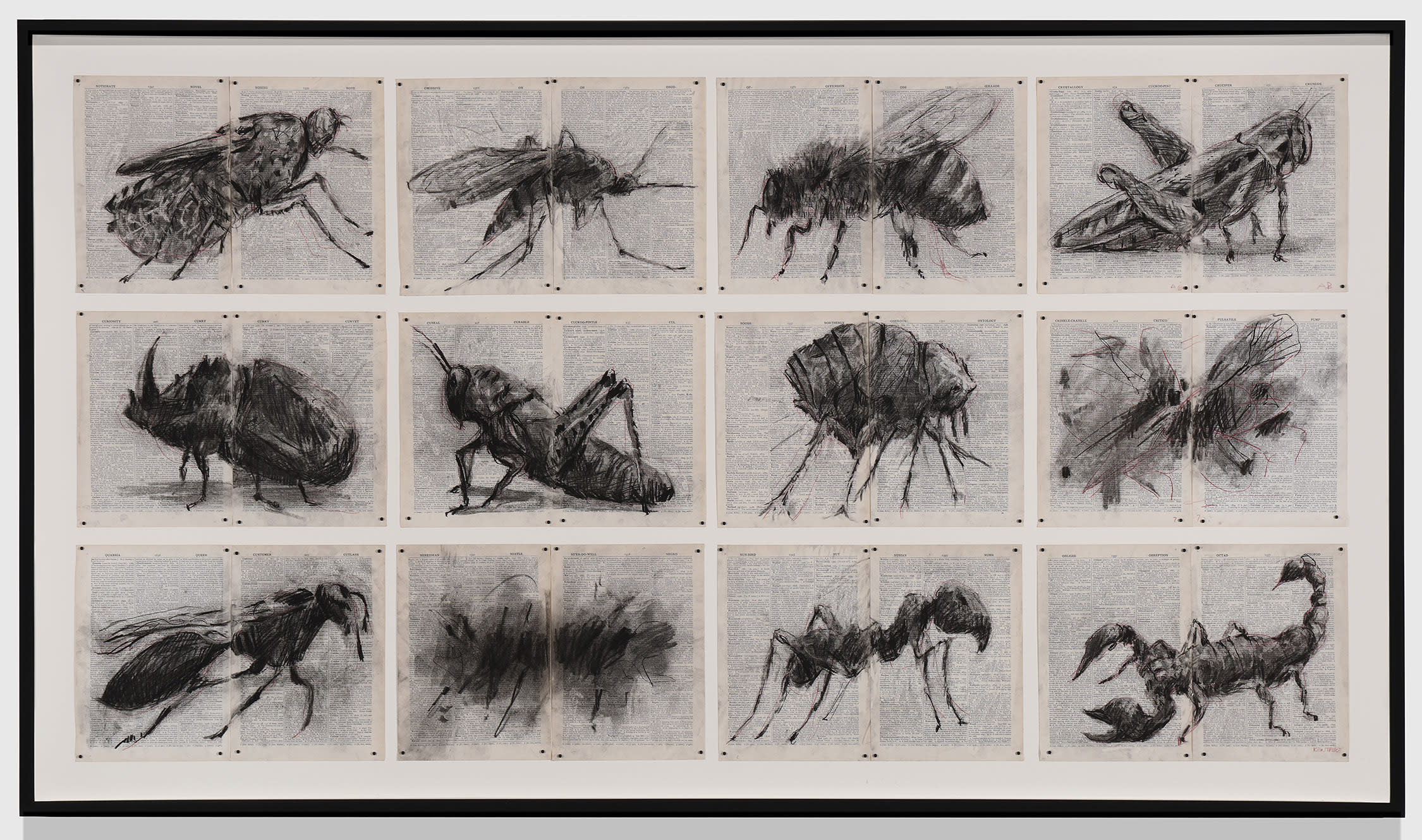 12 insects drawn by William Kentridge