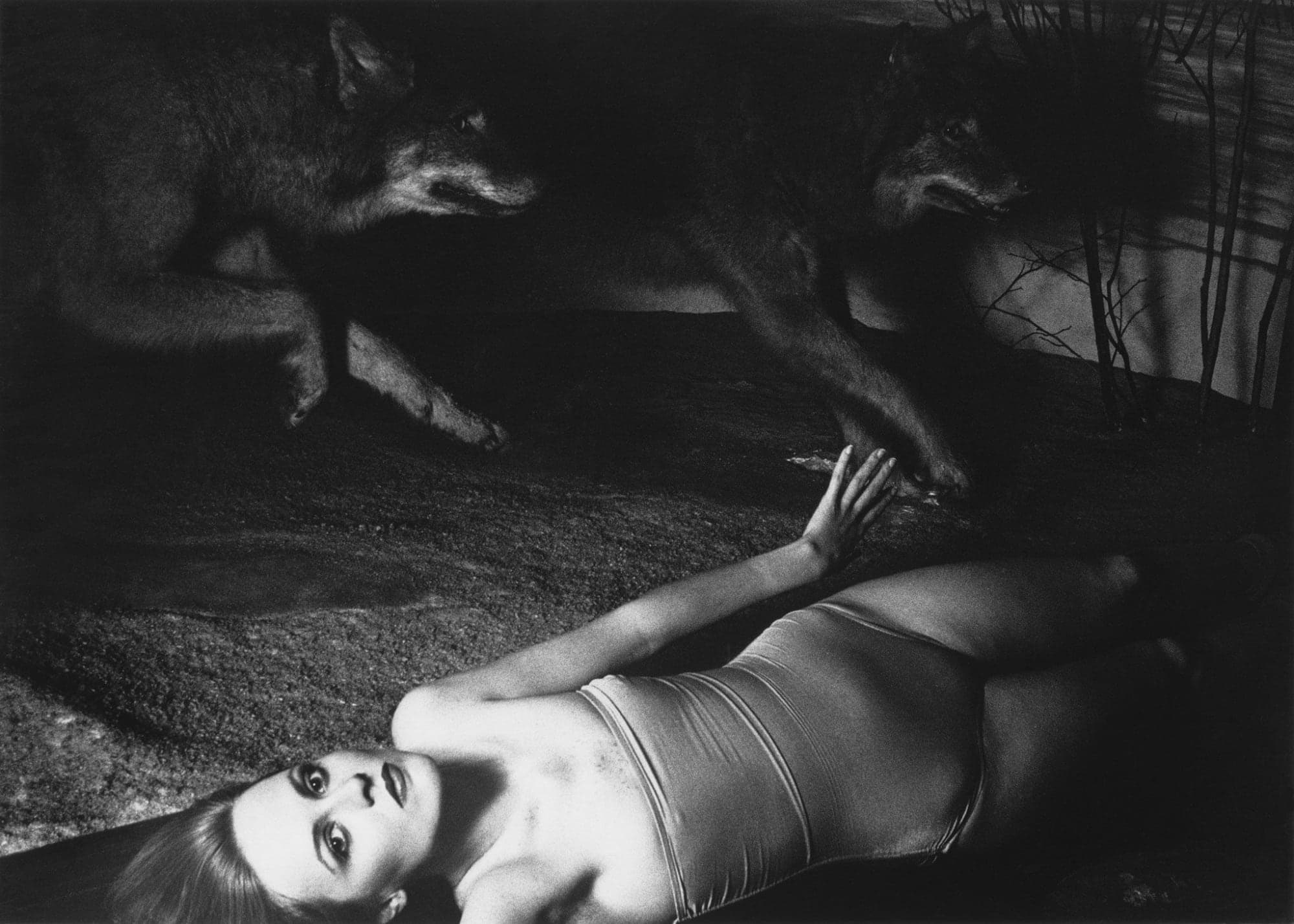 Black and white photograph of a horizontal figure and two running wolves with dramatic lighting.