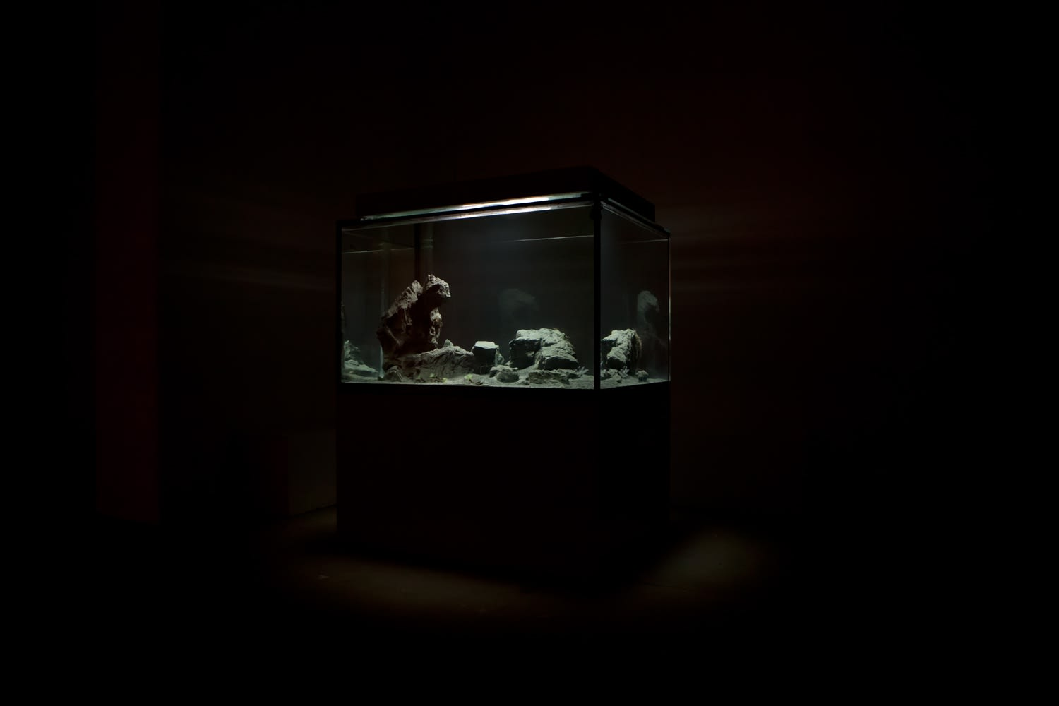 A large, lit aquarium with small fish lights up a dark room.