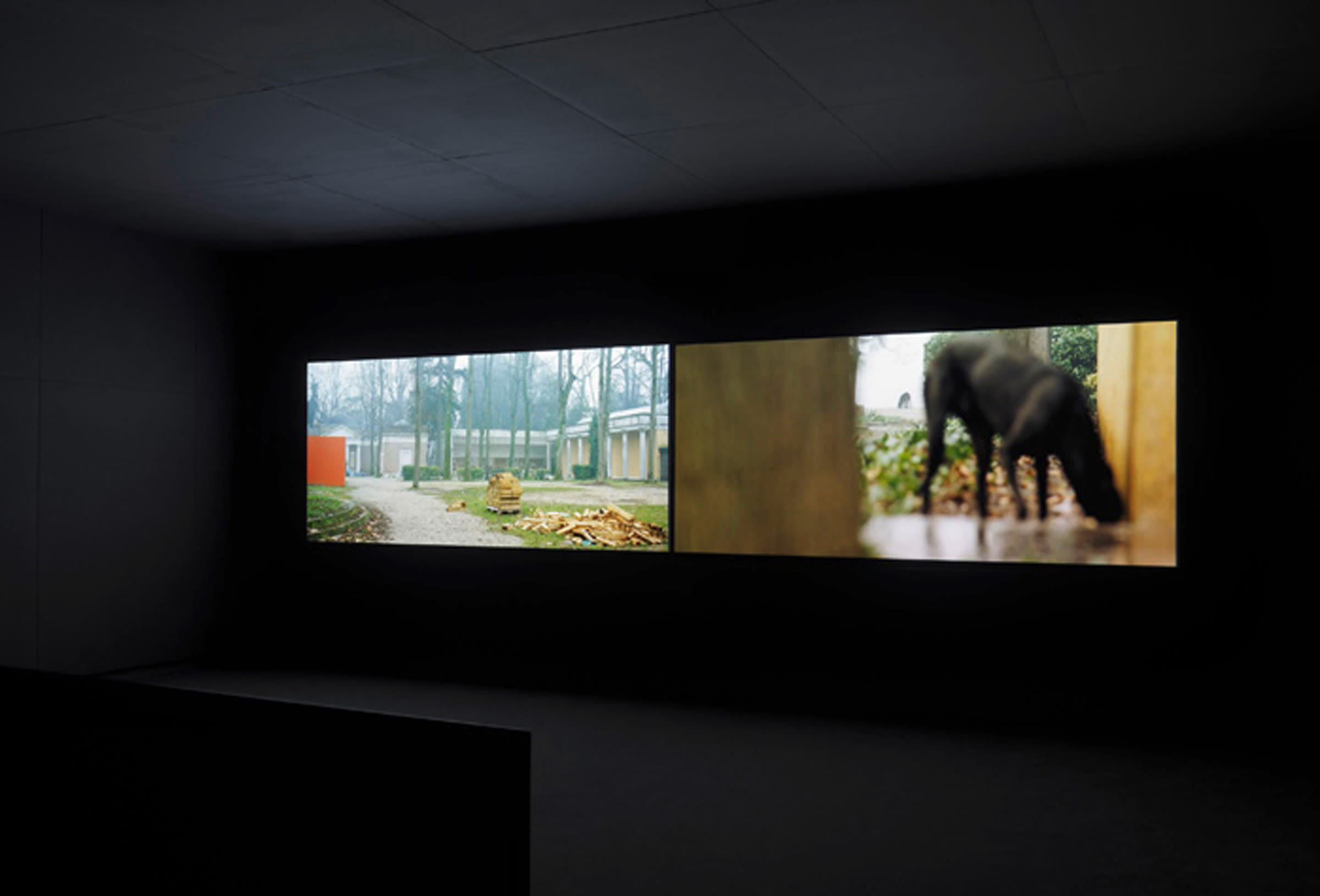 2 projections sit horizontally in a dark theater. On the left, a building with columns sits back among the trees. On the right, a black dog is in the foreground, face indistinct.