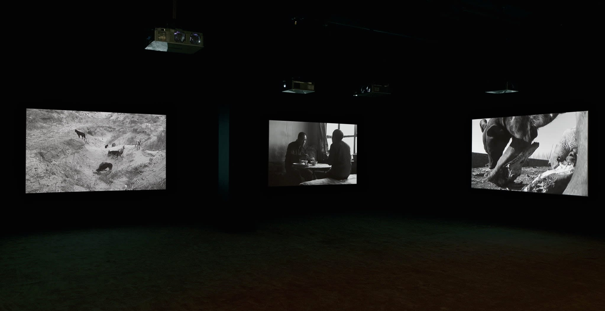 Three black-and-white images depicting men talking and dogs playing are projected around a dark room.