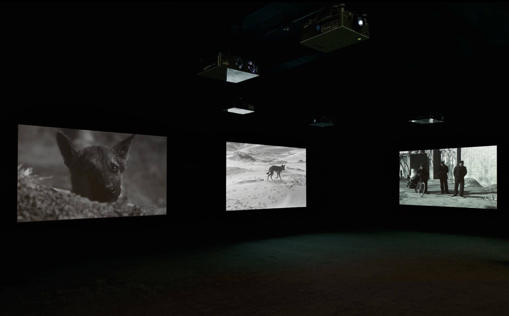 Three black and white images depicting various dogs and men talking are projected in a dark room.