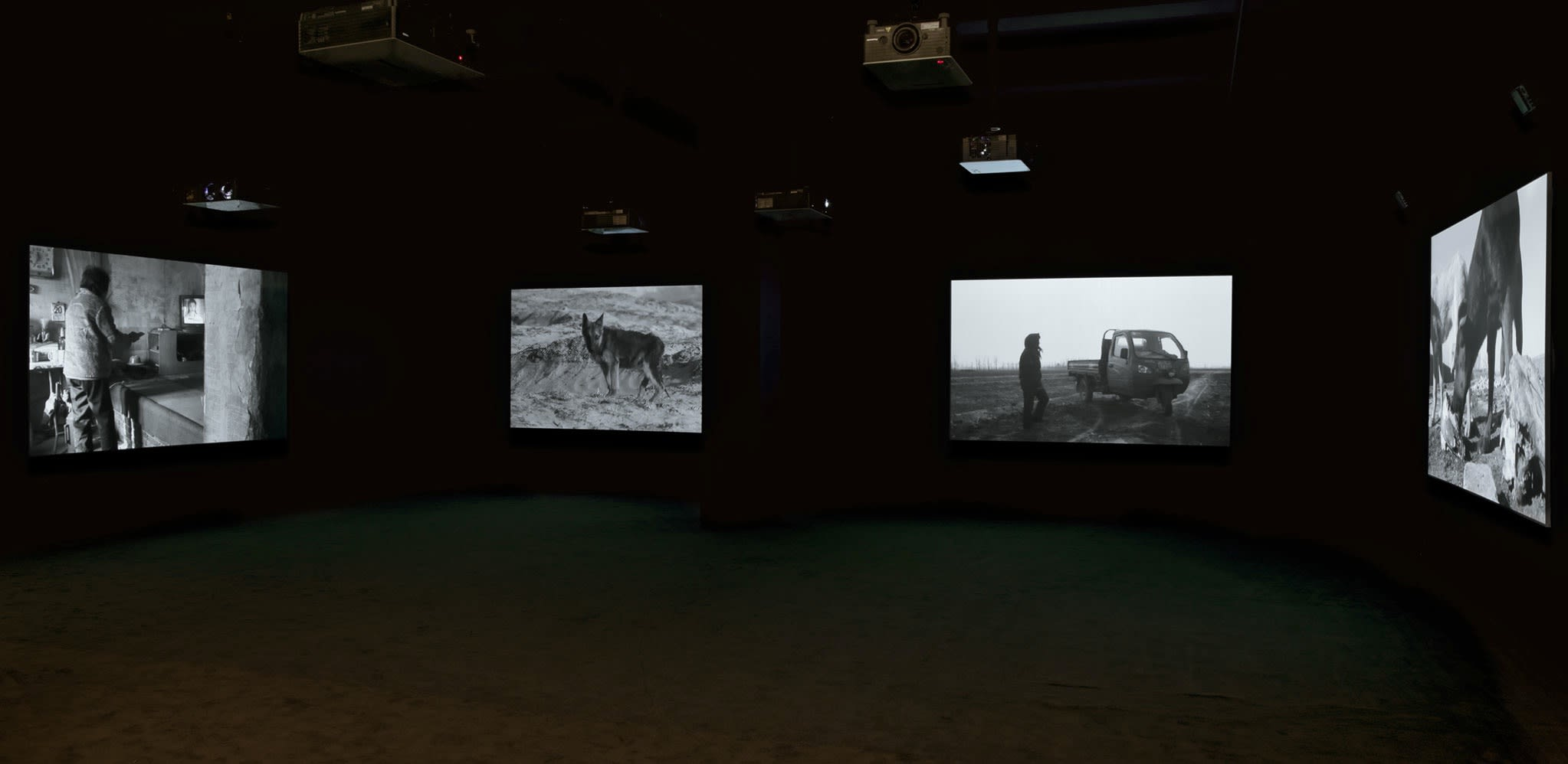 Four black and white images depicting various dogs and farm life are projected around a dark room.