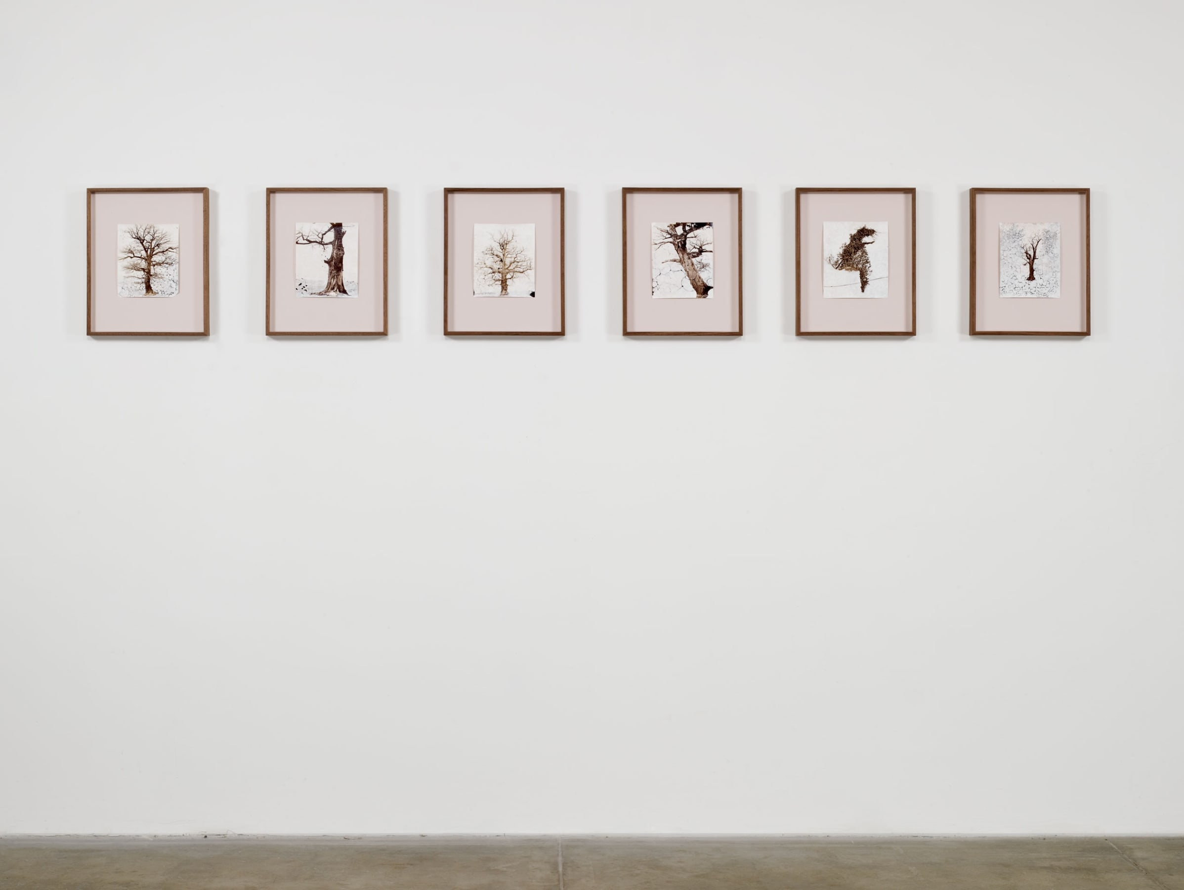 Six framed drawings of bare trees are aligned on a white wall.