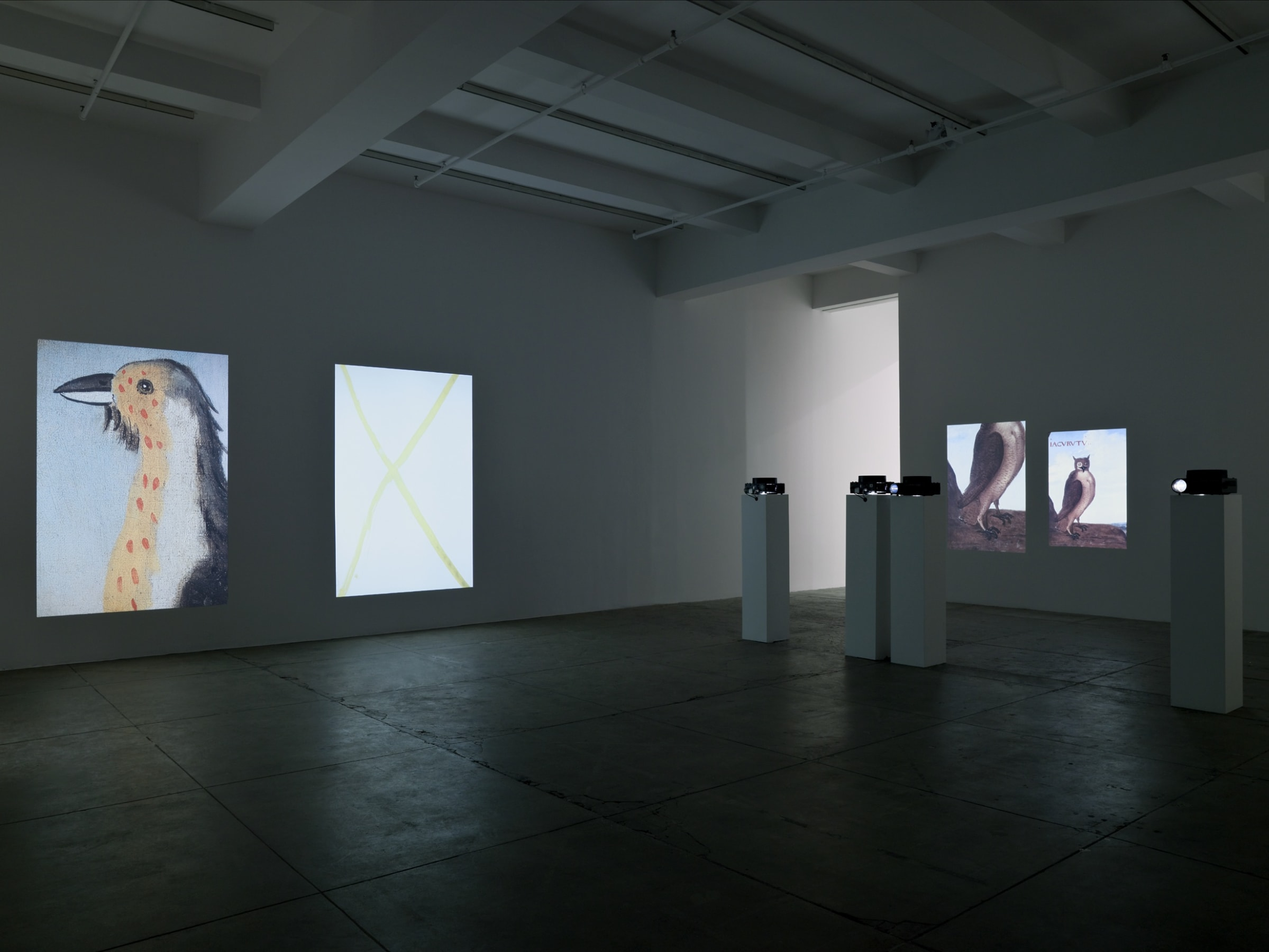 Four large projections of birds illuminate a large, dimly lit room.