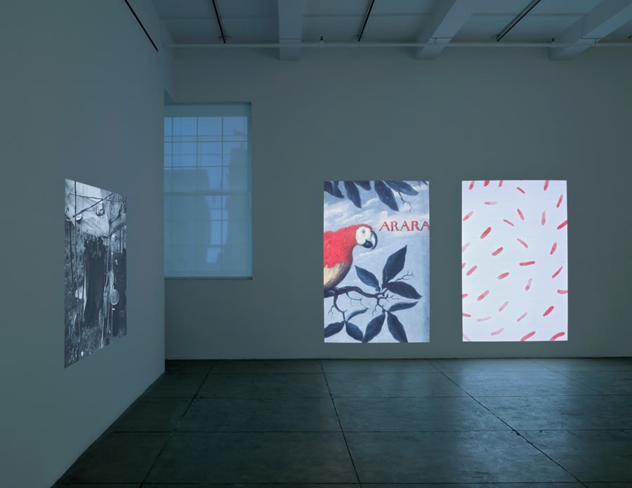 Three large projections of a bird, a feather-like pattern and a black-and-white image illuminate a dimly-lit room.