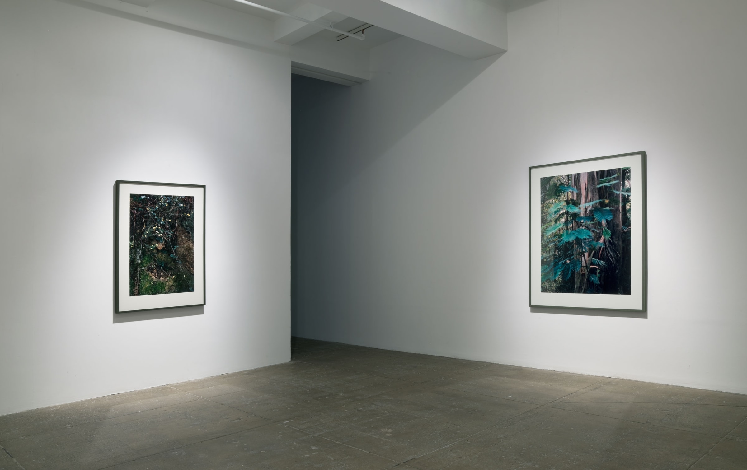Two large photographs of plants and trees hang in the corner of a room.