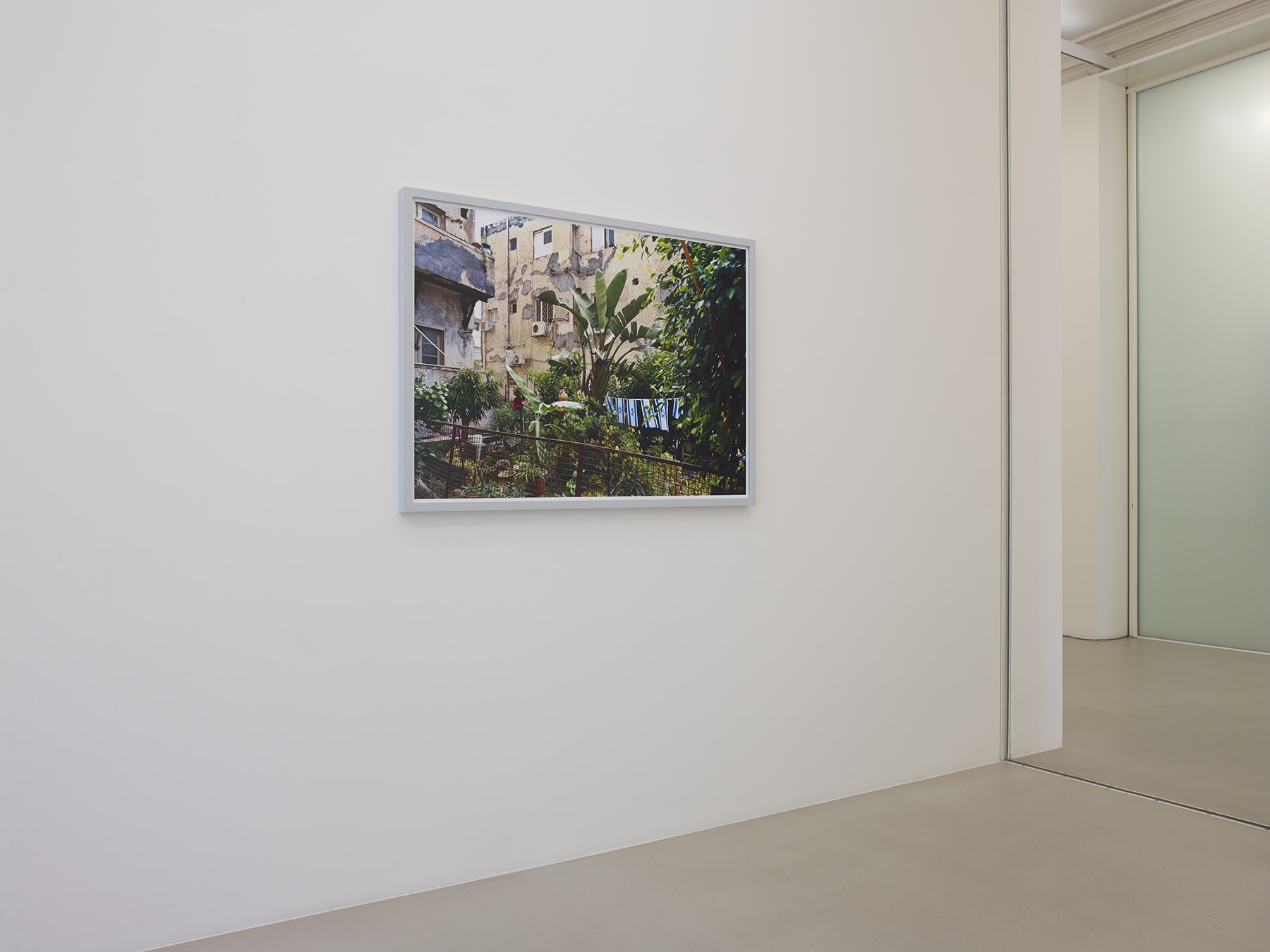 On a white wall, a photograph of a large plant in a courtyard in front of a building hangs.