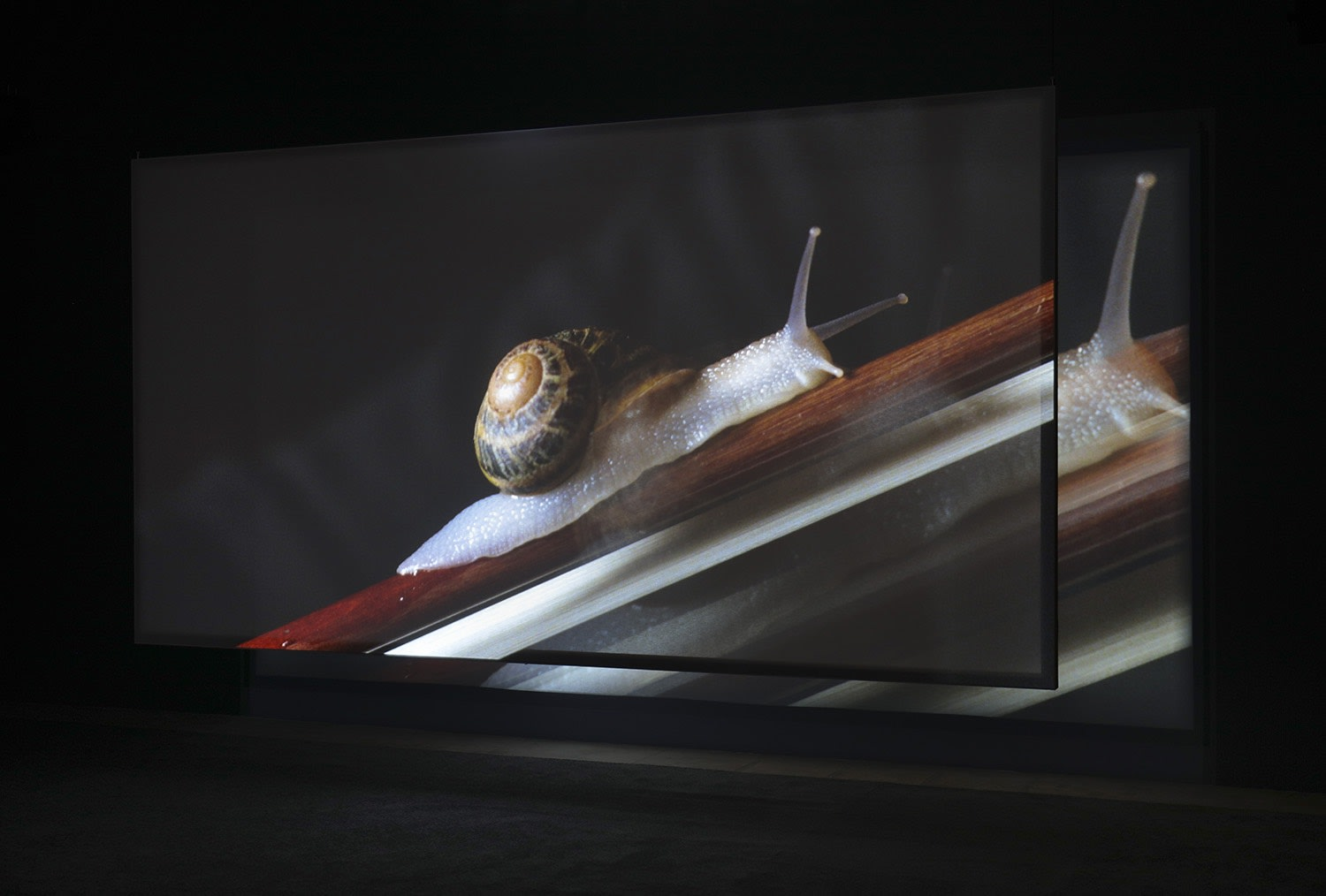 Image of a snail projected onto a screen in a darkened room.
